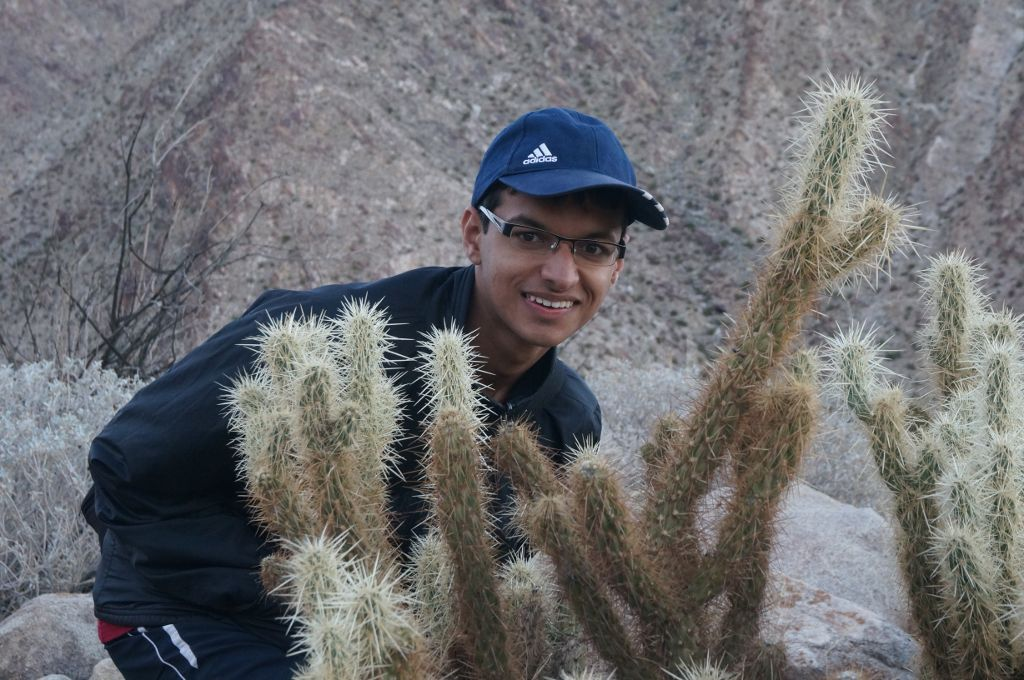Cactus at Anza-Borrego